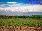 เที่ยว-ชม เมนโดซา เมืองแห่งไวน์ ประเทศอาร์เจนติน่า