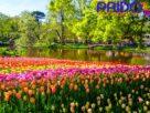 เที่ยว-ชม สวนเคอเคนฮอฟ ประเทศเนเธอร์แลนด์